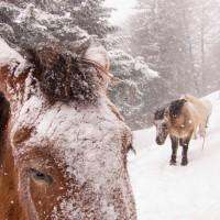 Dolly dans la neige