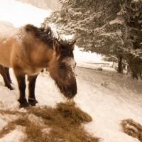 Grisou mange sous la neige